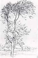 "Otto Modersohn (1865-1943)  ""Birke im Wind"" , 1898"