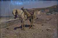 artist: Ilya Repin
